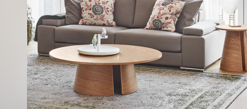 parots seating on light brown coffee table.